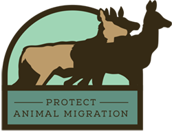 Protect Animal Migration